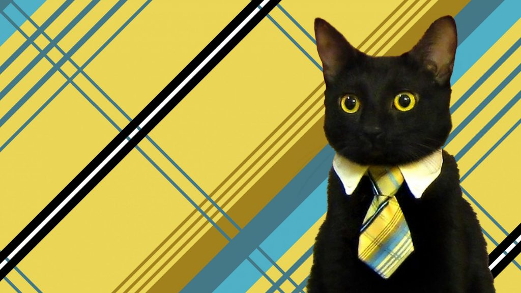 business cat gato negocios template plantilla para meme